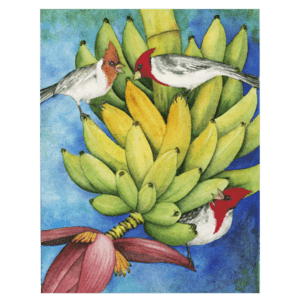 Brazilian Cardinals in the Bananas Giclée