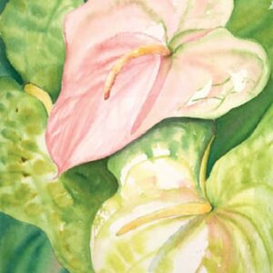 Pink Anthuriums I Nancy Forbes
