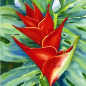 Red Heliconia Nancy Forbes