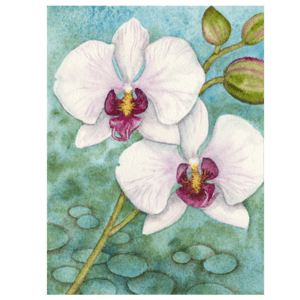 Phalaenopsis in Blue Giclée