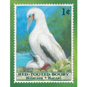 Red-Footed Booby/Kilauea